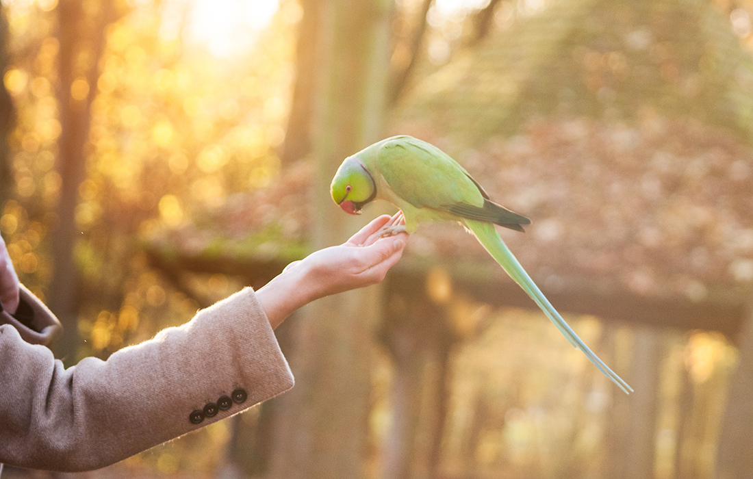 Bird feeding out of hand