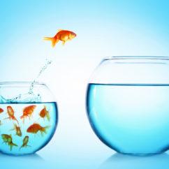 Goldfish jumping from bowl
