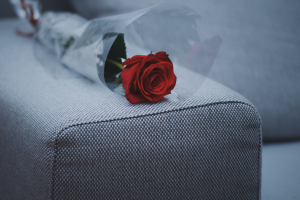A red rose , like ones given out in reality TV shows The Bachelor and Bachelorette.