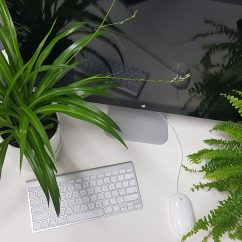 Plants at desk