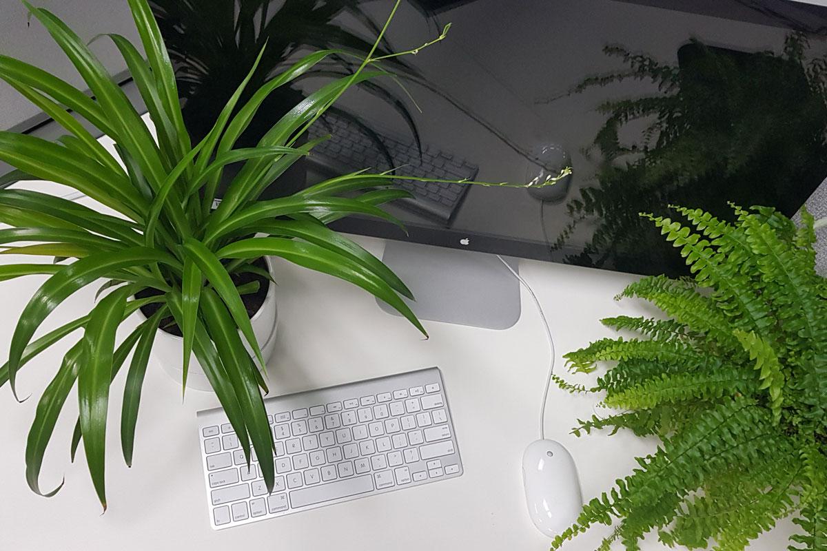 Plants at desk