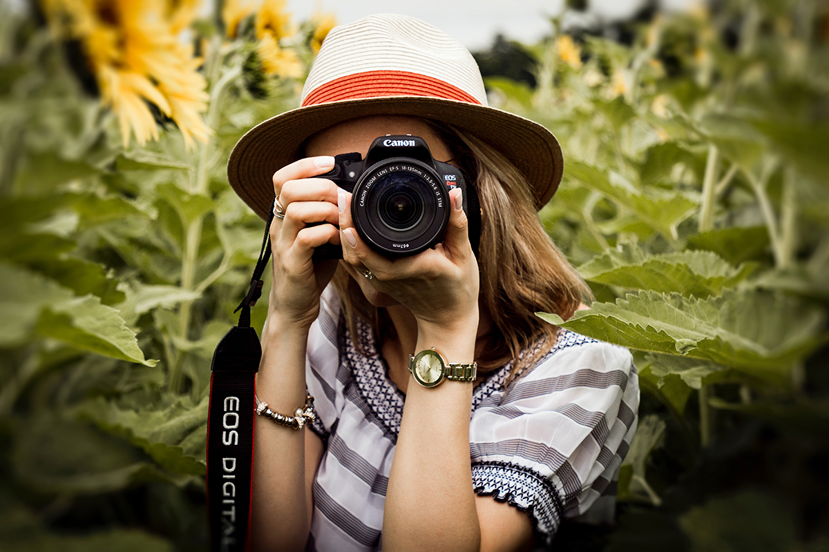 Front view of a woman wearing a hat and holding a camera to her face in a fields of sunflowers.